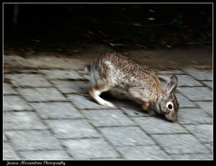 Follow the rabbit, he's going to be late.