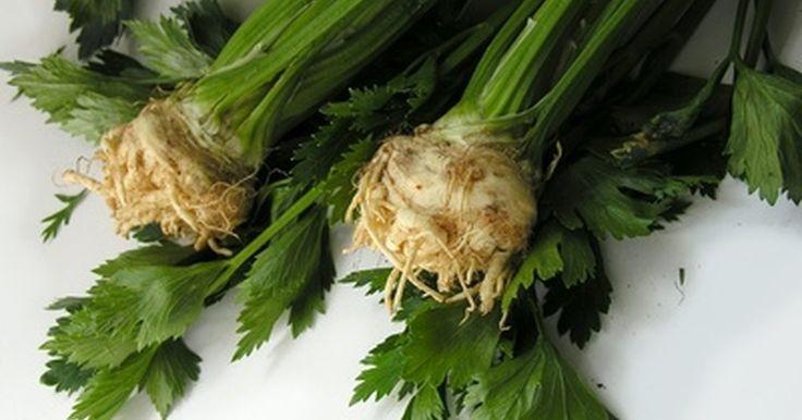 Los efectos secundarios del té de la raíz del diente de león