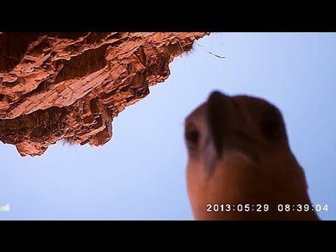 Un aigle vole une caméra - http://www.2tout2rien.fr/un-aigle-vole-une-camera/
