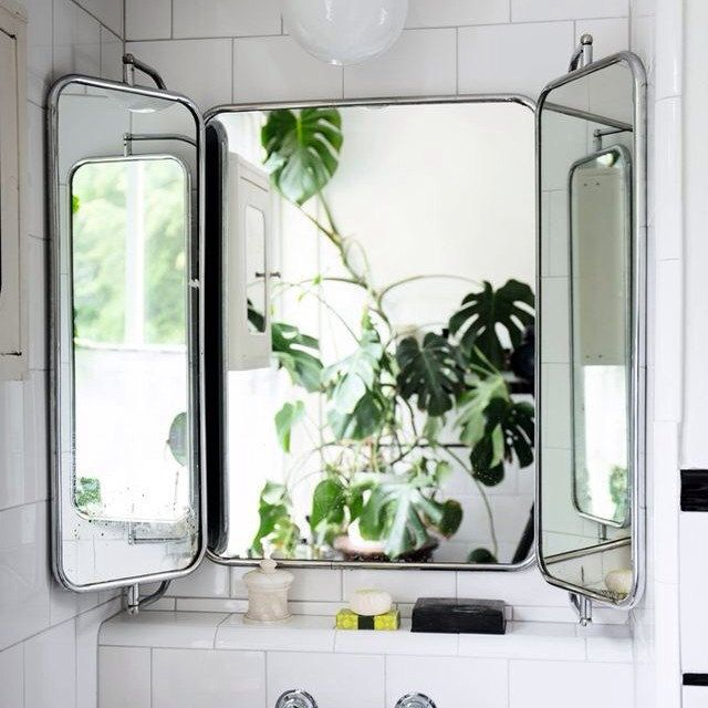 Cool Bathroom Plants 12 best mirror images on pinterest | bathroom ideas, room and
