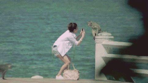 Des singes complices pour voler un sac - Monkey complicity to steal a bag
