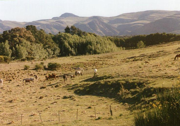 Mejores 197 im genes de fotos de viaje mendoza y buenoa for Ventanas hacia el vecino argentina