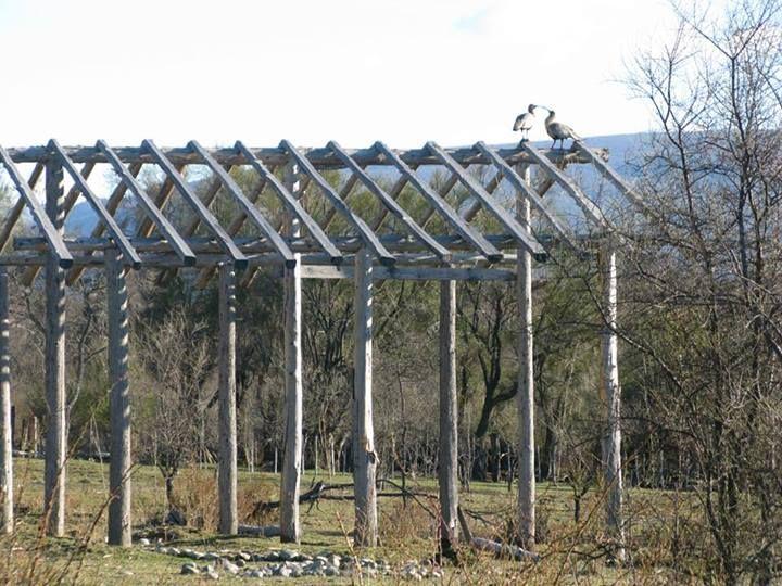 Bandurrias en la estructura de la futura casa de barro. Construcción Natural en Mallín Ahogado, Patagonia.