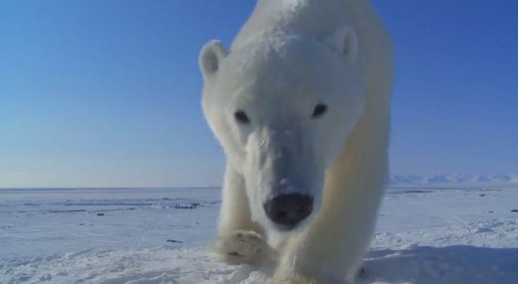 Sensory: BBC Wildlife Director John Downer & the technology of 'spy-cam' filmmaking