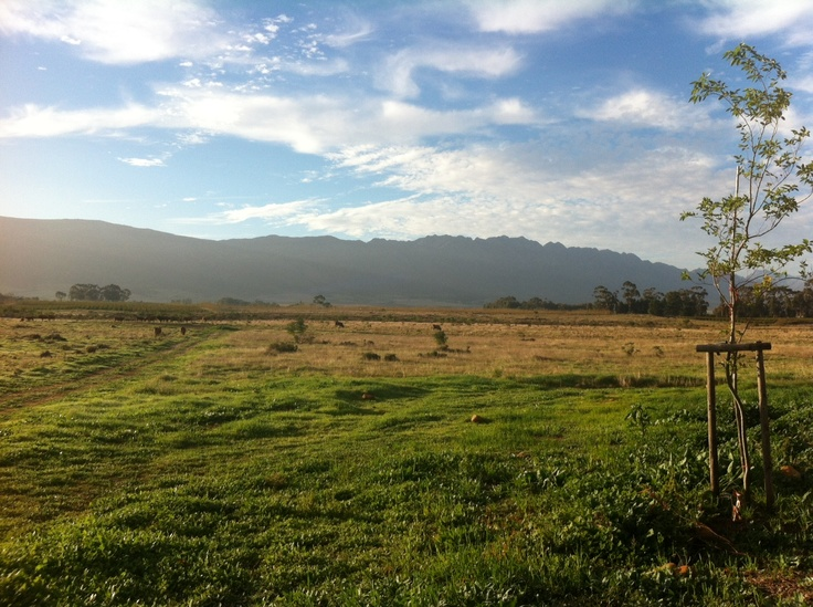 view from Cottage Nr.11, Saronsberg Wine Estate, Tulbagh, South Africa