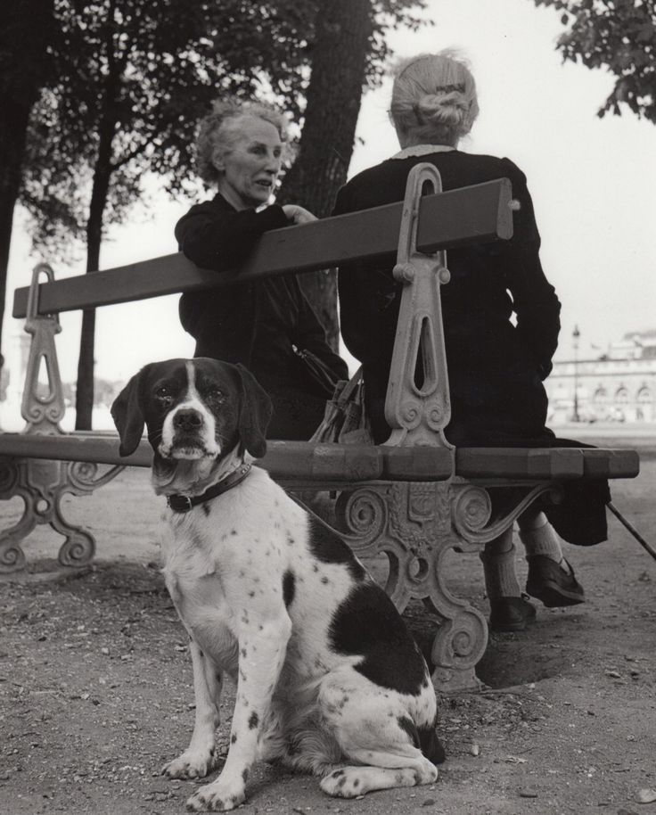 Sabine Weiss //  Two Women and Dog, 1954