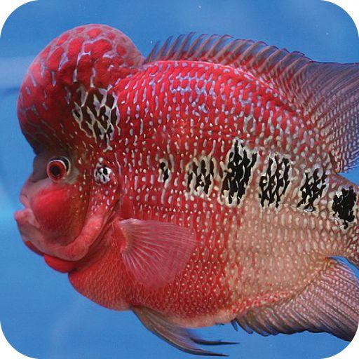 Tropical fish crazy fiskar pinterest havet for 99 5 the fish