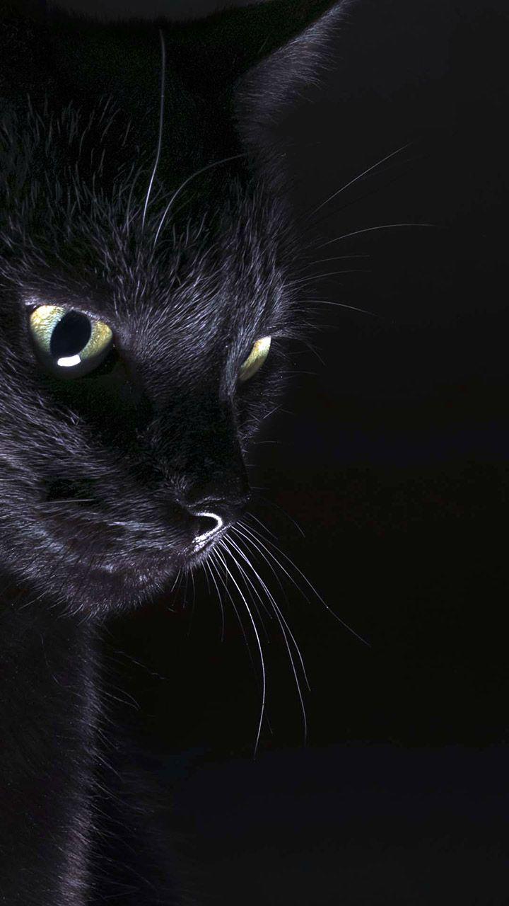 Amoled Cat Wallpaper In 2020 Cat Background Black Cat Aesthetic Cat Aesthetic
