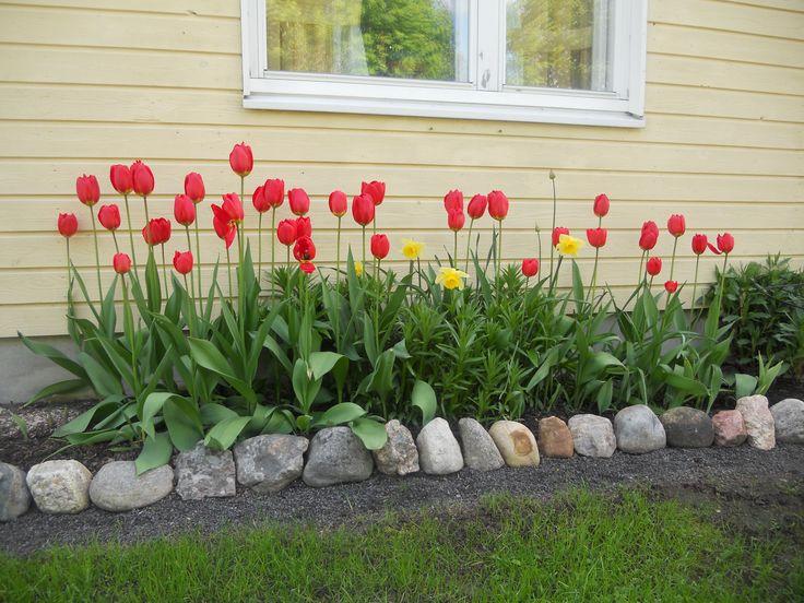 2015 Tulips