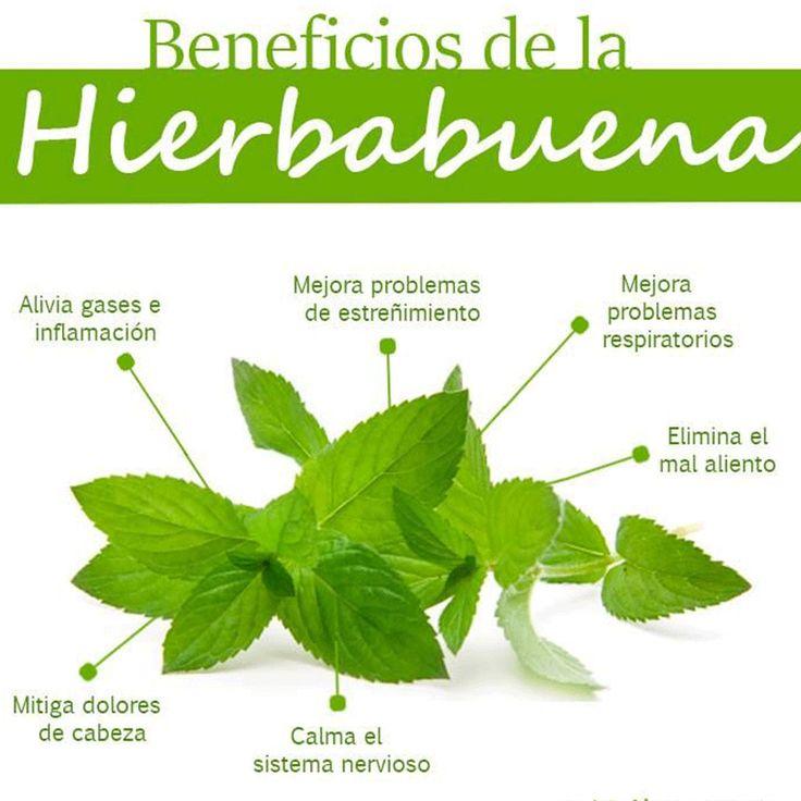 Este jugo de vegetales tiene como protagonista la #Hierbabuena, necesitarás: 1 pepino, 2 tallos de apio, 1 naranja, 1 limón y 1 puño grande de hierbabuena. Visita nuestra página web www.terra.net.co y llámanos al tel: (4) 3860181 Imagen vía habitos.mx