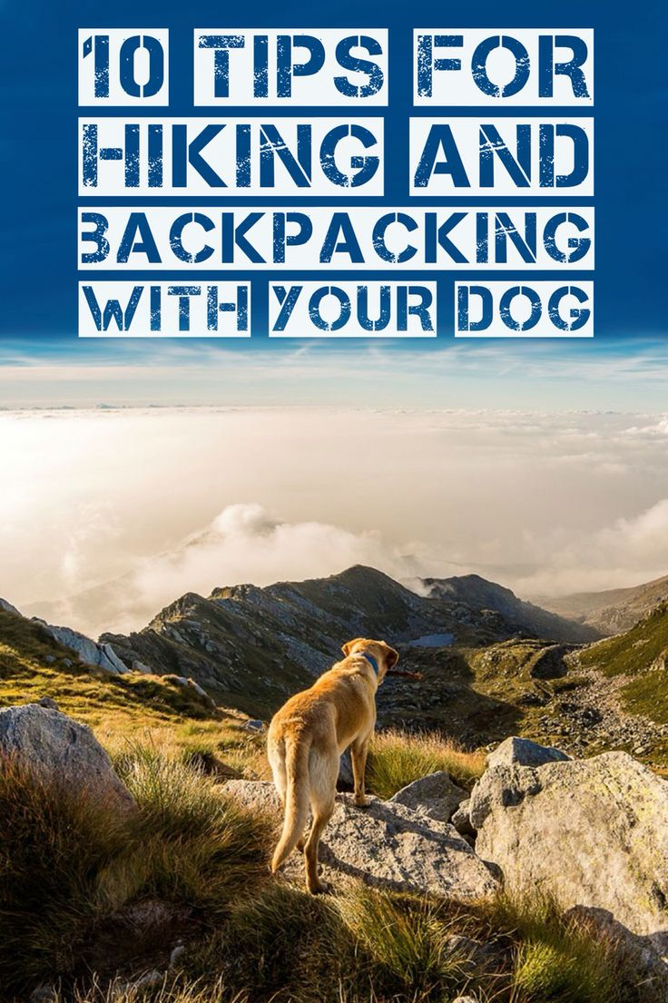 Tips for hiking, backpacking and camping with your dog!