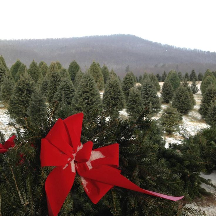 90 Best Christmas In Virginia Images On Pinterest Virginia  - Christmas Tree Farm In Virginia