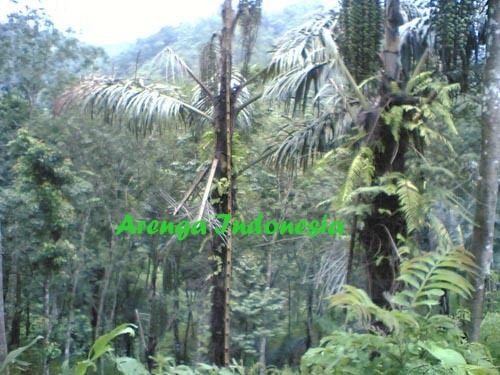 ARENGA INDONESIA: Bambu Alat Bantu Pengolahan Gula Aren