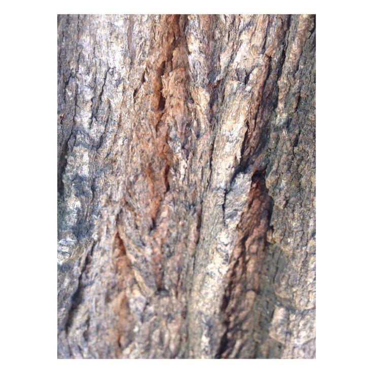 ACG // tronco árbol de invierno