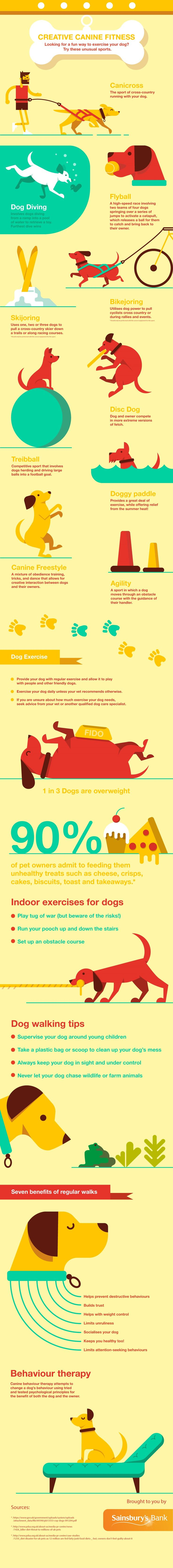 Dog & Fitness Infographics | SlimDoggy