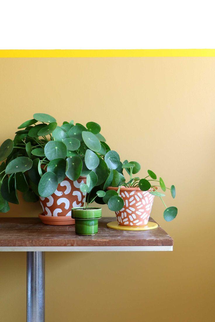 les 187 meilleures images du tableau pil a p p romioid s sur pinterest botanique b b et. Black Bedroom Furniture Sets. Home Design Ideas