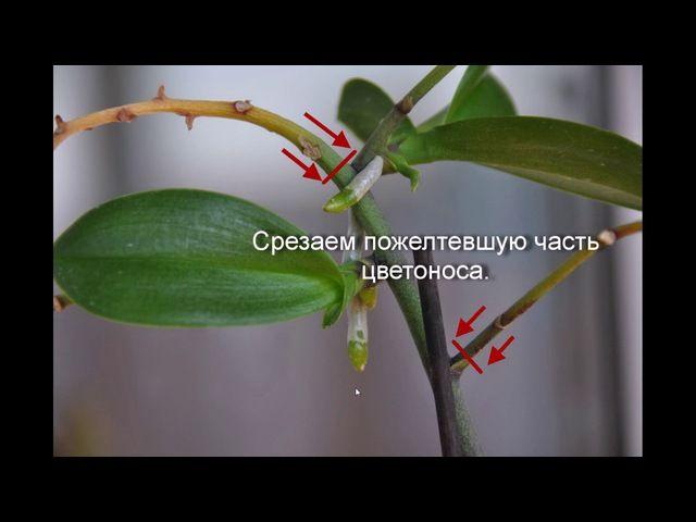 -~~~= Орхидеи =~~~-