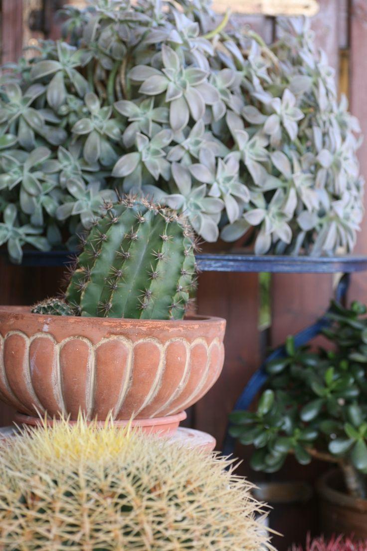 #cactus levels at Yakinthos Residence #Mykonos