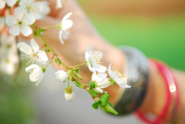 Dreamy Blossom :: Mơ màng bên đóa hoa Xuân