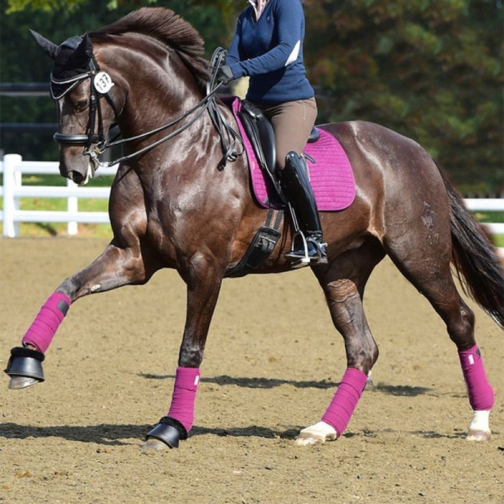 These Matchy Matchy sets are ideal #Christmas presents - just £44.99 for a LeMieux ProSport Suede Dressage Square (D-Ring) (Large) with matching LeMieux Luxury Fleece Bandages #horse Available in Autumn Plum (shown), Beige, Benetton Blue, Navy and White!