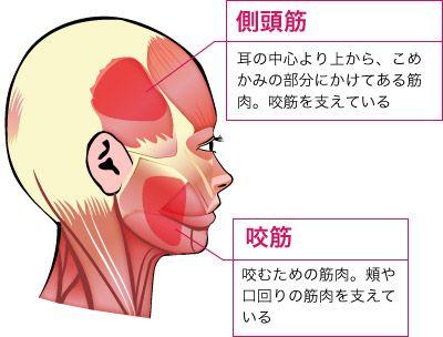 ほうれい線のできる原因は、頬の筋肉のたるみに加え、頬の筋肉を上部で支える側頭部の筋肉と、下部で支える口元の筋肉の衰えにあります。これらの筋肉が柔軟性や張りを失うために、頬の筋肉を支えられなくなり、ほうれい線ができるのです。