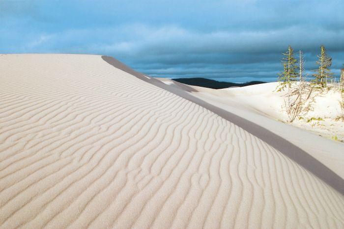 Top 10 Don't-Miss Spots on the Oregon Coast / Dunes National Recreation Area at Umpqua Dunes (John Dellenback Dunes Trail)