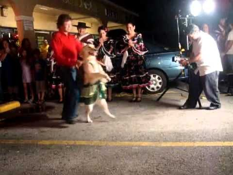 Merengue Dancing Dog - Seen it a million times & never fails to make me smile :D