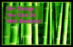 Wood Chip Mulch for the Garden: Can you ever have too much mulch! Bamboo is perfect for this, especially if you have too much and don't know what to do with it. Get a wood chipper and have at it!