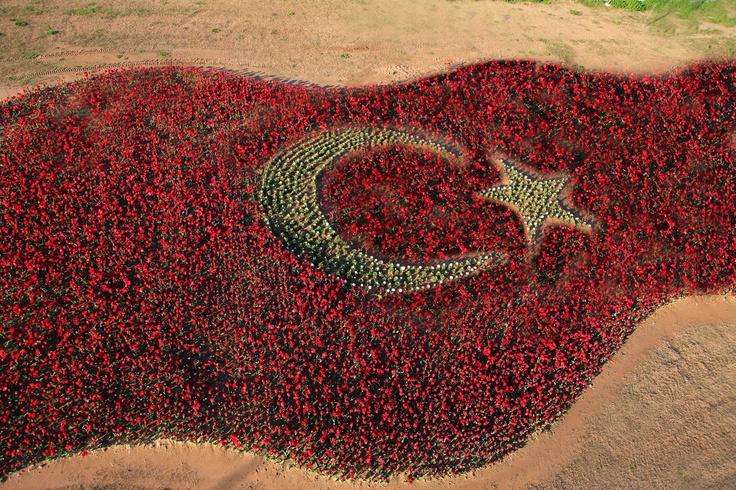 Antalya- Side - Lalelerden Türk Bayrağı / Flag of Turkey composed of tulips