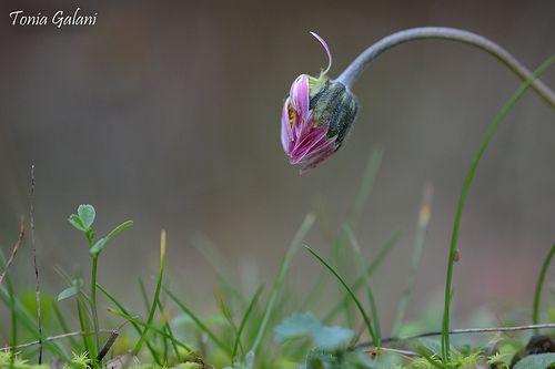 Flower grace...