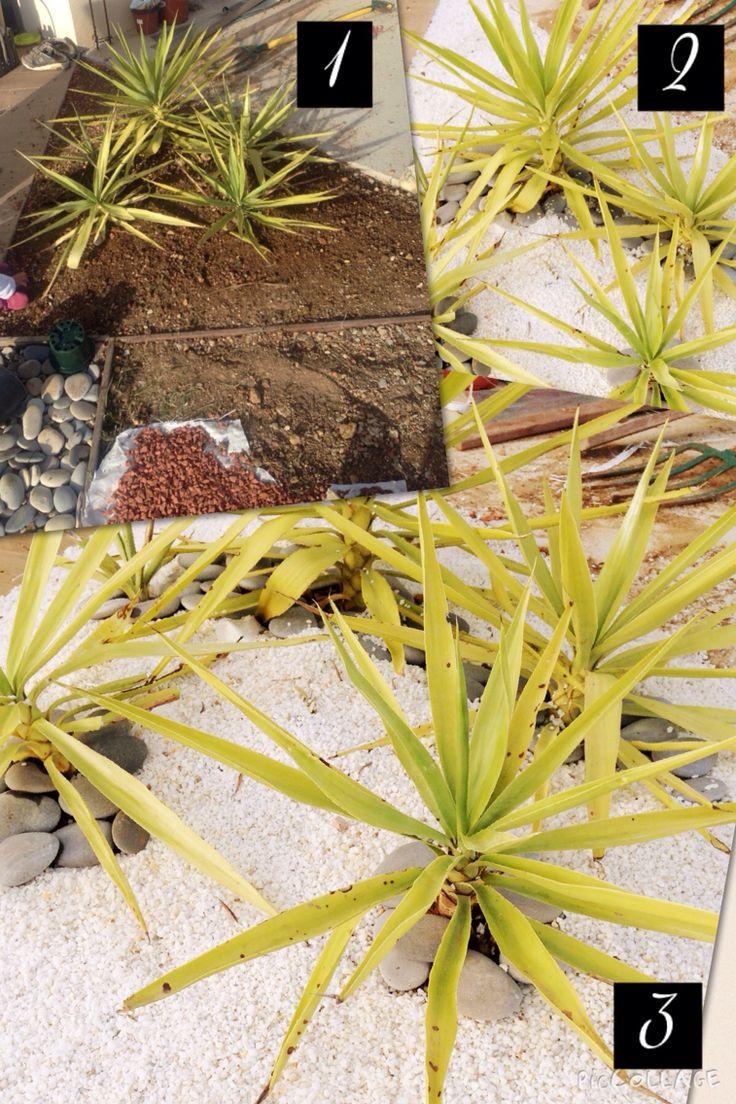 Arrangement angle Plantation de boutures de yucca faites en août 2015 Galets blanc marbre