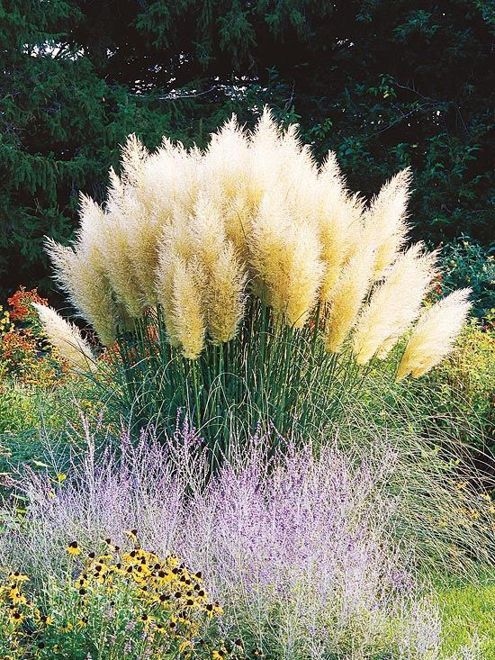 753 best ornamental grasses and landscape grasses images for Tall grass landscape ideas