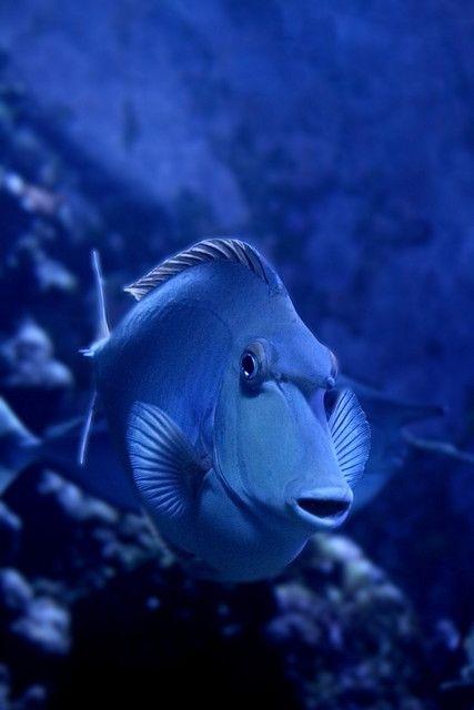 deep deep marine blue
