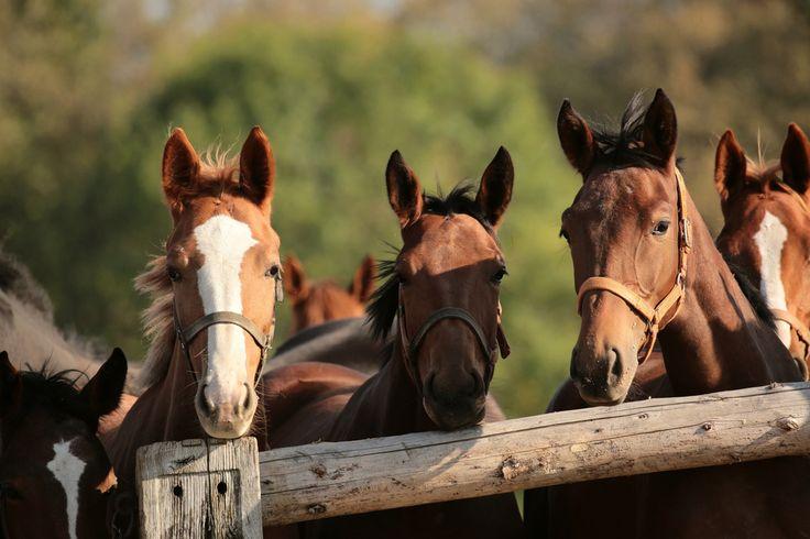 Equine Infektiöse Anämie (EIA) bei Pferden: Das solltet Ihr über die Krankheit wissen.