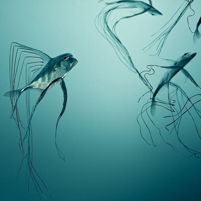 Fish Texture, via Flickr.