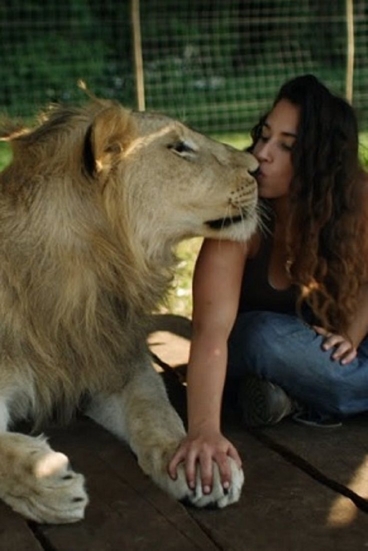 Image of: Puppy Lions Treat Woman Like The Leader Of The Pride video lions treat Pinterest Lions Treat Woman Like The Leader Of The Pride video lions treat