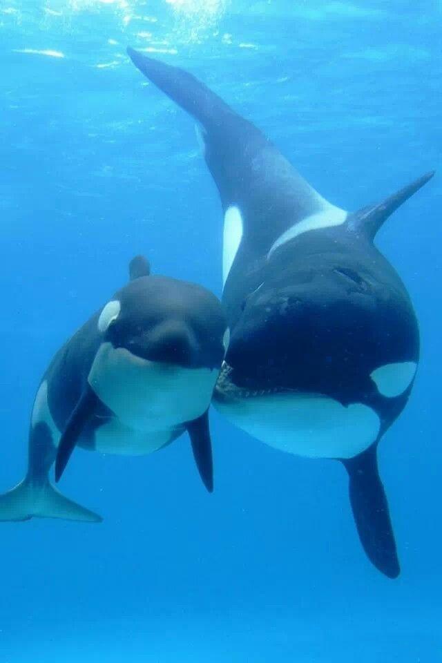 Orca y su cría.                                                       …                                                                                                                                                                                 Más