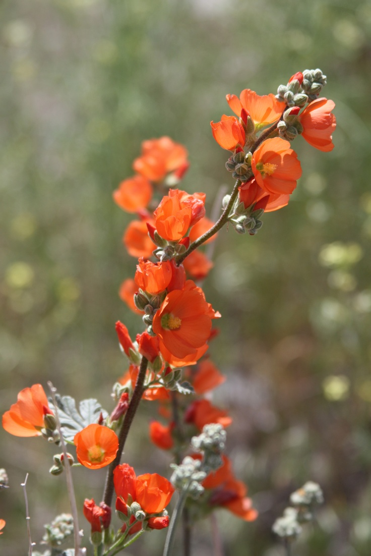 best edible garden images on Pinterest Gardening Potager