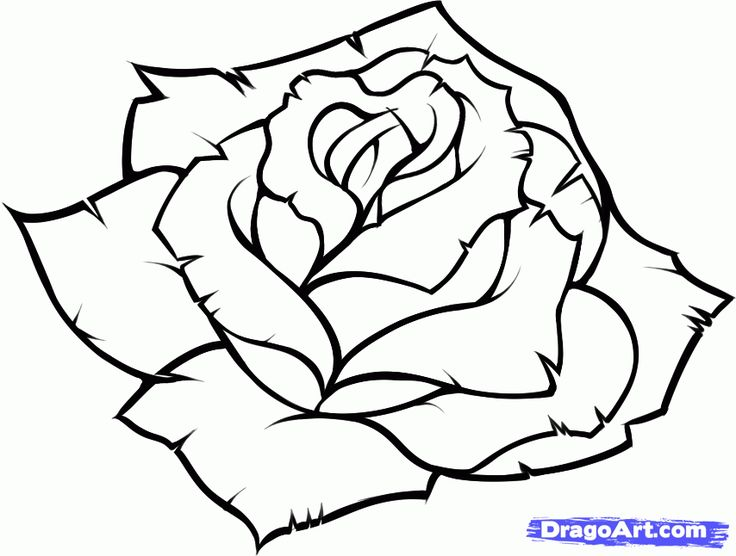 Best 25 Easy to draw rose ideas on Pinterest  Easy drawing