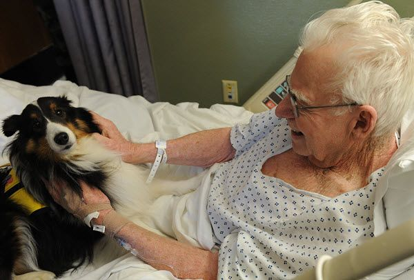 The Surprising Benefits of Pet Therapy in Nursing Homes #nursebuff #nursinghome #pettherapy