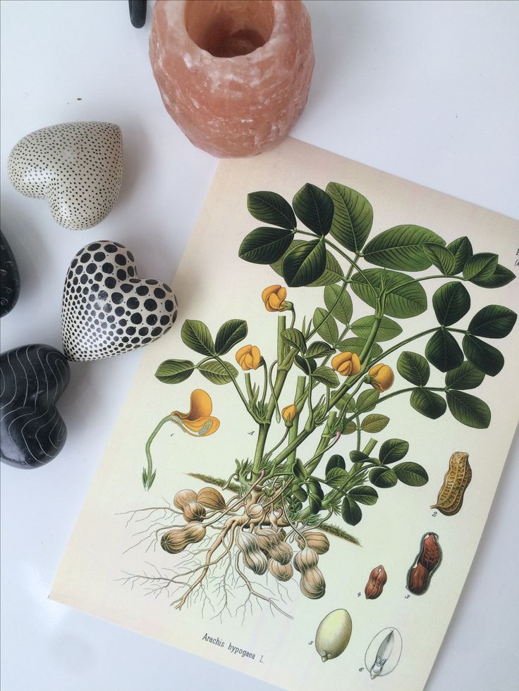 Awesome peanutposters from home decor! Fits perfectly on the wall in a nice, clean frame. A4 for 129 SEK in the webshop!