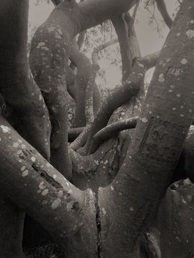 The tree. Photographed in Africa by Anna Mizgajska