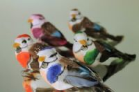 Colourful birds, Arts & Crafts - Super Floral Distributors - Decor, Floral accessories and Crafters accessories in Cape Town