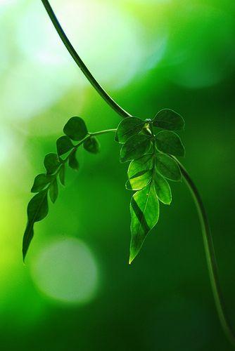 De ziel van de mens is als wind die over de planten waait,  als dauw die druppels op het gras legt,  als regen die alles doet groeien.  Even zo zou van de mens zijn welwillendheid moeten uitstromen  naar iedereen die daarnaar verlangt.  Wind is hij, als hij een mens in nood helpt,  dauw, als hij de eenzamen troost,  regen, als hij de vermoeiden overeind helpt