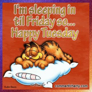 Happy Tuesday Funny Sayings | Tuesday Quotes graphics and comments