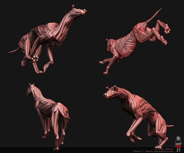 39 Best Anatomy Animals Images On Pinterest Animal Anatomy