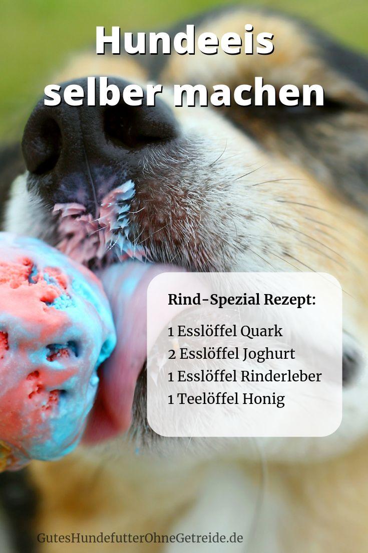 Haga usted mismo helado para perros: helado especial de carne   – Hunde Ernährung