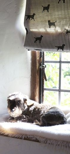 Comfy, sunny windowsill, with a blind in Emily Bond Labrador fabric. Wow!