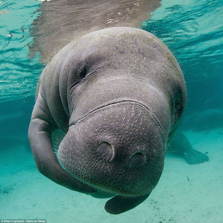 Hello: This incredible image of a marine mammal earned Ellen Cuylaerts first place in the Freshwater category