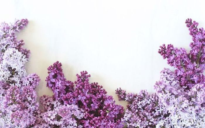 Lilac Flower At The Bottom In Front Of A White Background Spring Wallpaper For Co In 2020 Spring Desktop Wallpaper Imac Wallpaper Computer Wallpaper Desktop Wallpapers